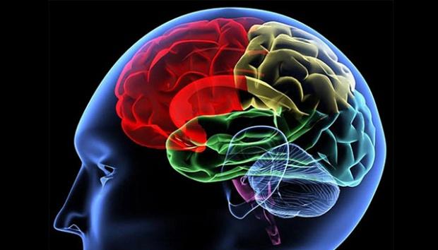 Riset Baru: Aktivitas Otak Berlanjut 10 Menit Setelah Kematian