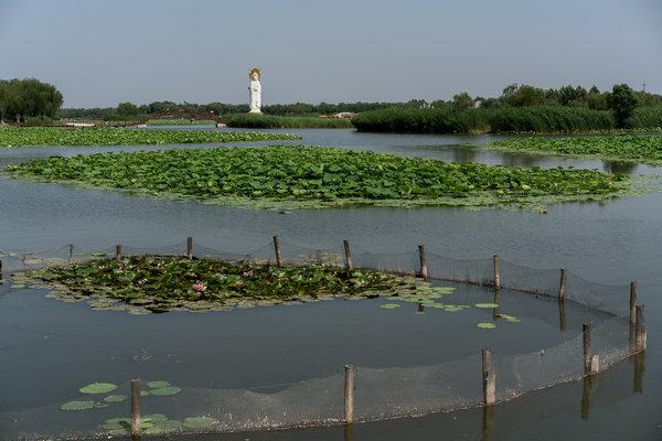 """雄安""""千年大计""""威胁白洋淀湿地生态"""